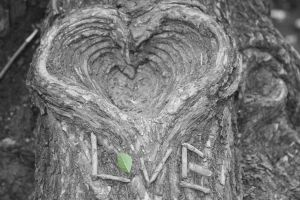 Love Nature by LivingThroughALens