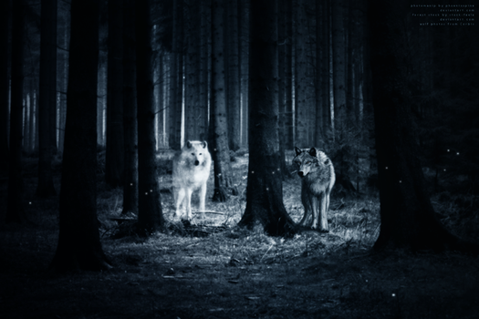 a.walk_in.dark_woods by PhoenixSpine