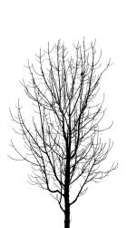 Monochrome Tree by Paseas-Images