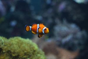 Nemo by Agamerswork