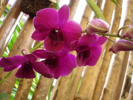 Orchids Stock iii by littlechina