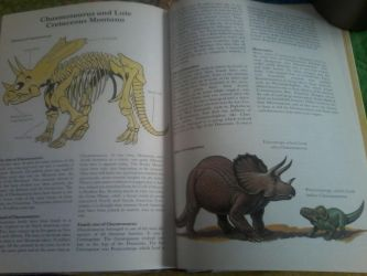 Facts about Chasmosaurus by nickthetrex