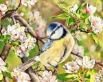 Spring Songs 1 by Adolin-of-Light