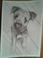 Cute little dog by davidsteeleartworks