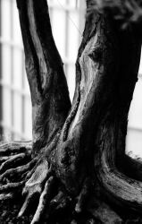 Strong Roots by Yule-Lord
