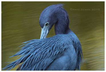 Little Blue by Nate-Zeman
