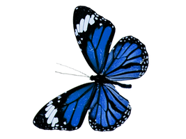 blue butterfly png 5 by yotoots