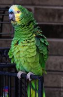 Ruffled her feathers by TlCphotography730