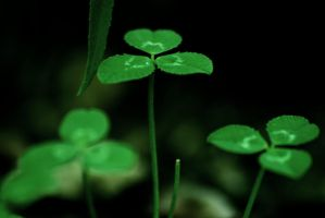 Clovers by LucAnthonyRossiter