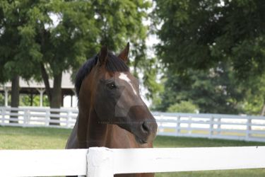 You Will Be Missed Beautiful Boy - Cigar July 2014 by Lovely-DreamCatcher