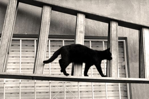 Ladder Cat by westwo0d