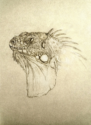 Iguana Sketch by Octurnas