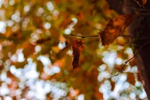 Leaves by matcheslv