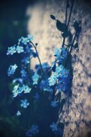 Forget me not by Saphii