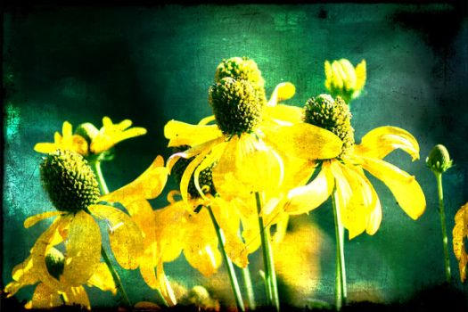 Yellow Flower by frogwah