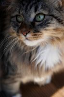 My cat 3 by Charliefoff