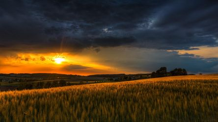 A Barley Field At Sunset by Saber1705