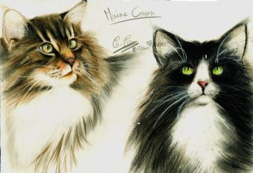 Maine Coon by SalamiCC