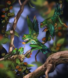 Flying frog in the wild by WeijiC