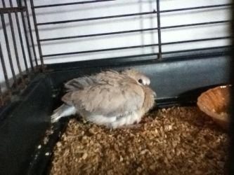 Baby dove mum saved by TenthDoctor34