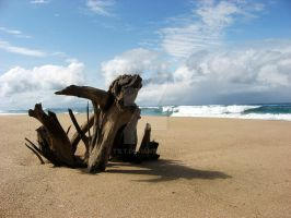 Driftwood by t1lt