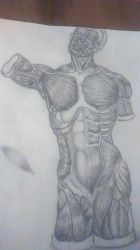 Muscles sketch by Tigresuave11