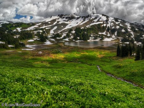 Meadow by IvanAndreevich