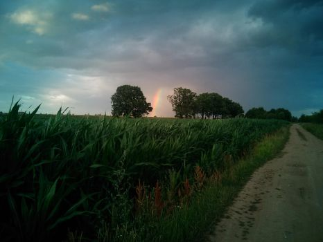 Rainbow above a Field by GrandHetman