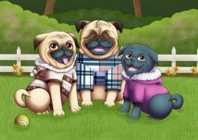 Three Happy Pugs by pdutogepi