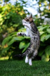 Jumping for joy by ZoranPhoto