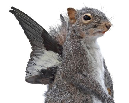 Fantasy Squirrel with Wings by KristenJarvisART