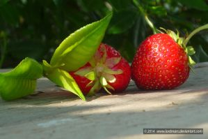 Strawberry by LordMars