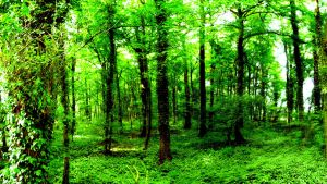 Wood forest green full hd by suicidecrew