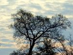 morning tree by Mittelfranke