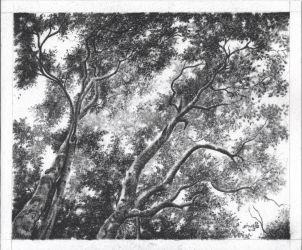 Forest canopy by aakritiarts