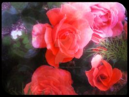 Roses Edit 17 by blackroselover