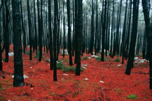 Forest I by bubastis2