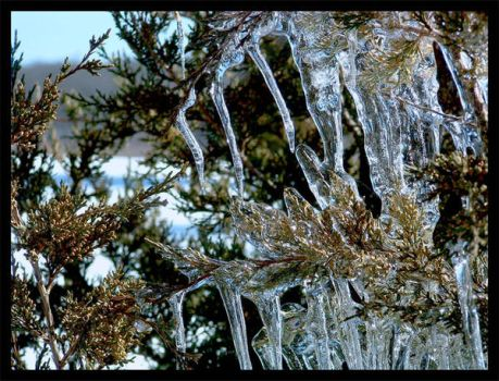Ice on Trees by The-Keymaker
