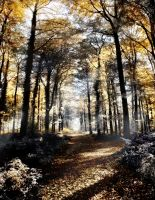 Autumn forest path Tree ~ S T O C K by AStoKo by AStoKo