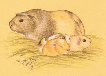 Guinea pig family by Paperiapina