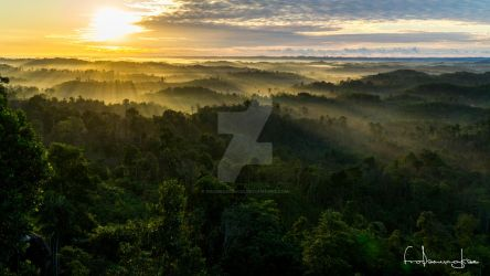 Sunrise Above The Rainforest by fromesa054402
