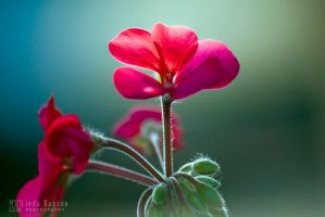 Colours of life by linda-Bee
