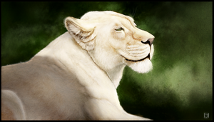 White Lioness by ArtofJefferyHebert