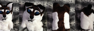 Coyo/Wolf Head  (Full Suit for Sale) by WildloreCreatures