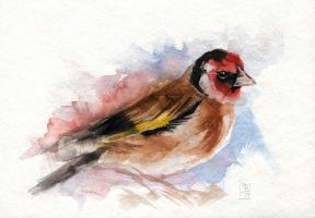 Goldfinch by wolf-minori