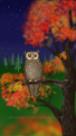 Owl of a Season -in the night by Oksana007