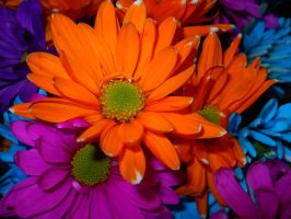 Flowers by Arany-Photography