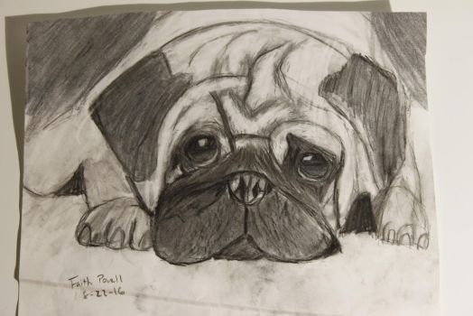 My Drawing of a Pug by WolfzArt13
