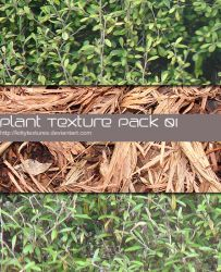 Plant texture pack 01 by kittytextures