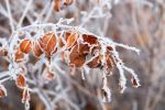 Leafs in ice by asteronix